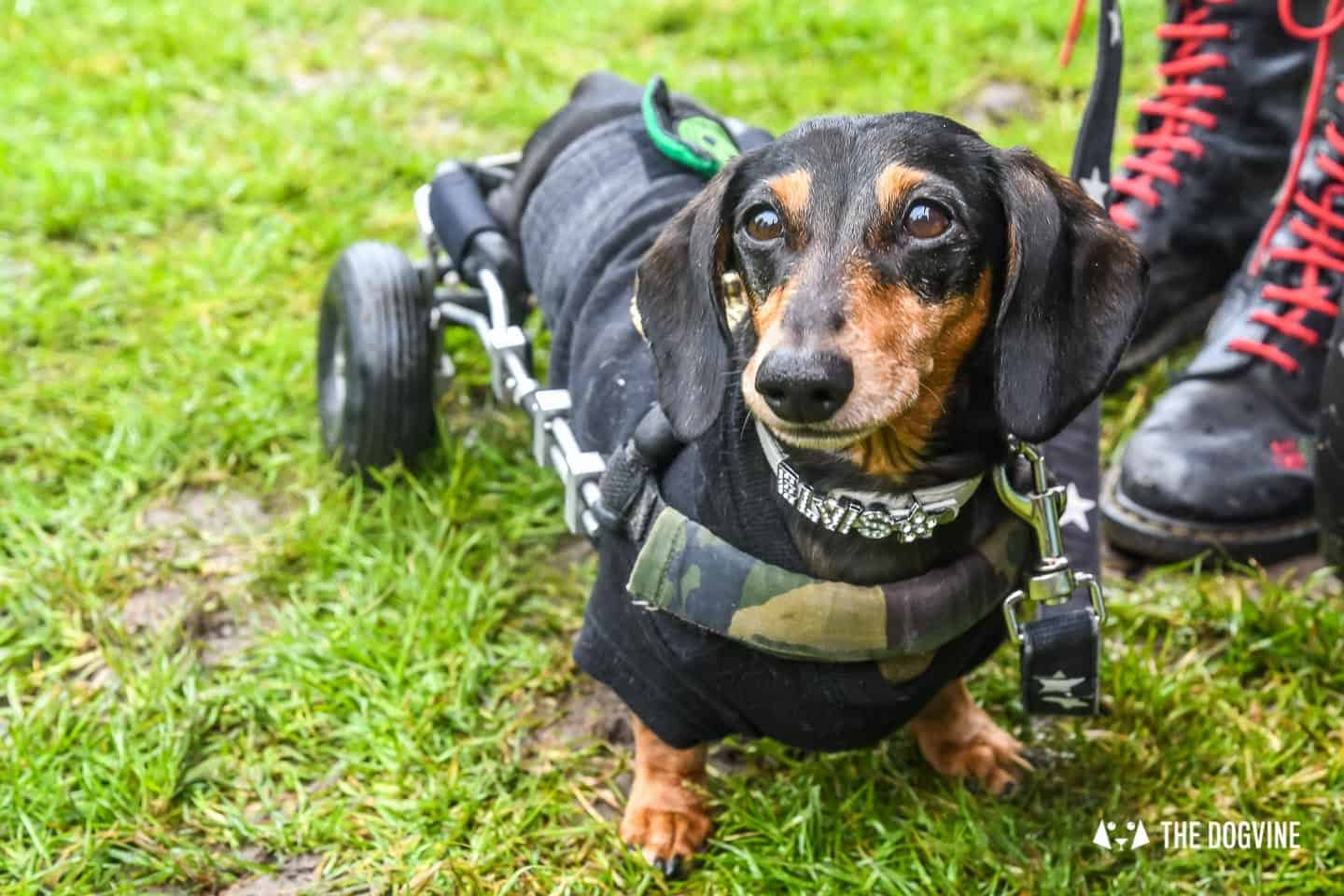 London Dogs At The Great Hampstead Bark Off 2018 165