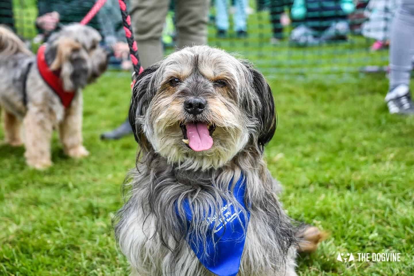 London Dogs At The Great Hampstead Bark Off 2018 60