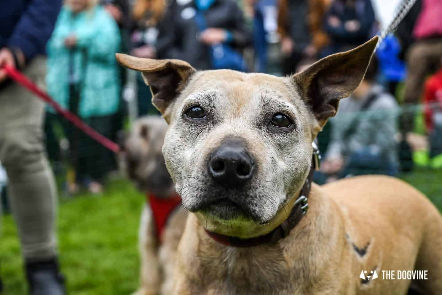 London Dogs At The Great Hampstead Bark Off 2018 67