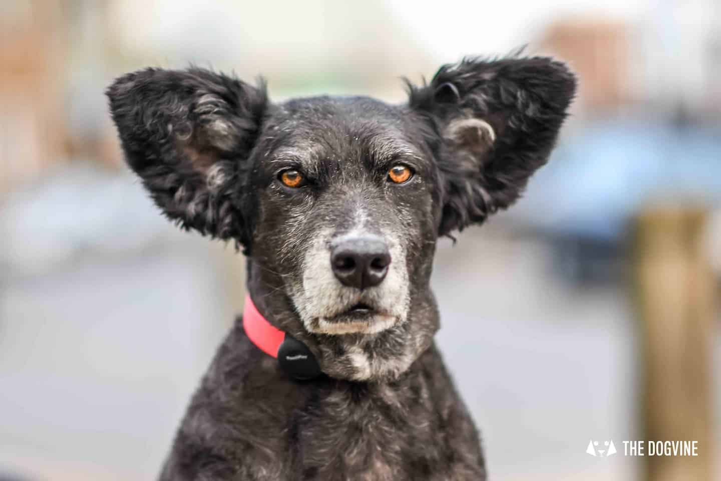 Things To Do With Your Dog In And Around London | 19-22 May - Belinha
