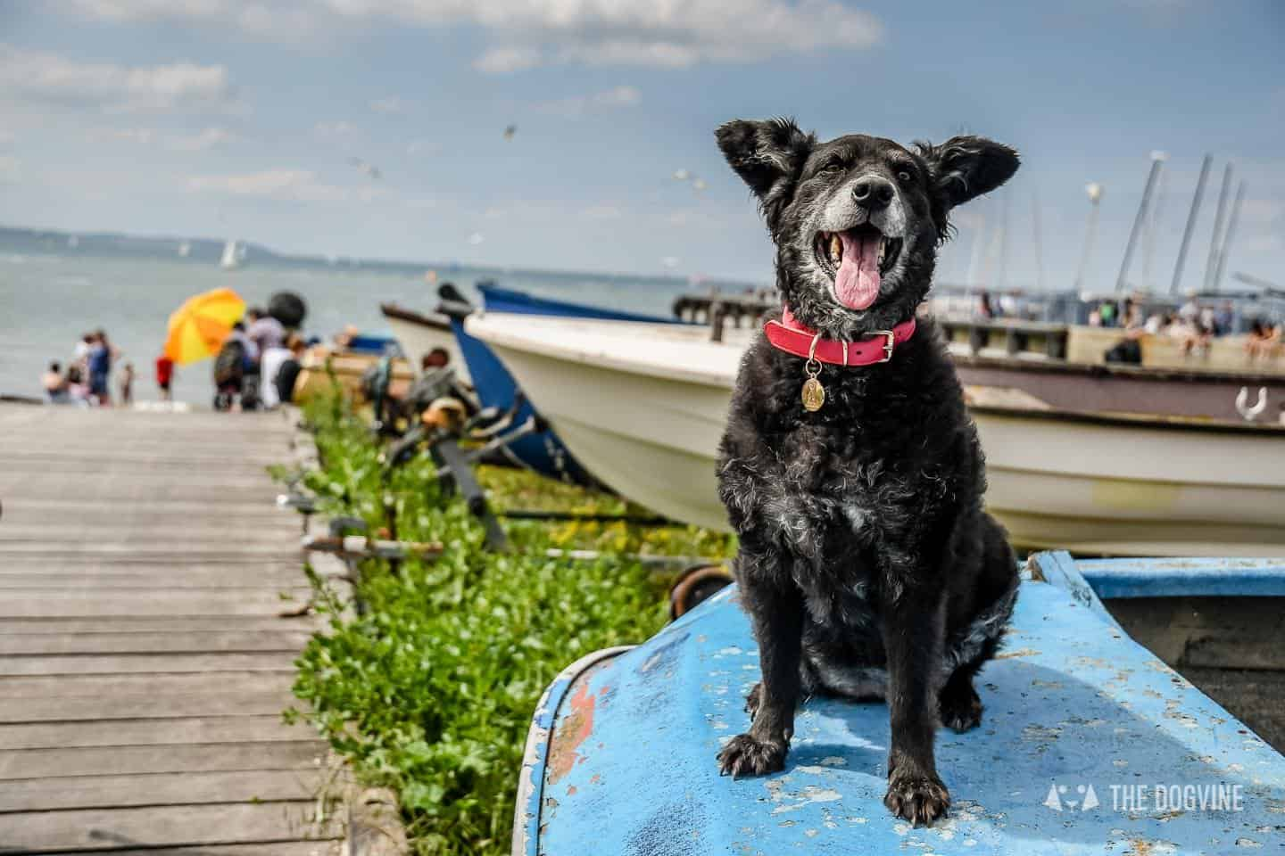 Dogs Day Out With Fetch & Follow On Tour In Dog-Friendly Whitstable 10