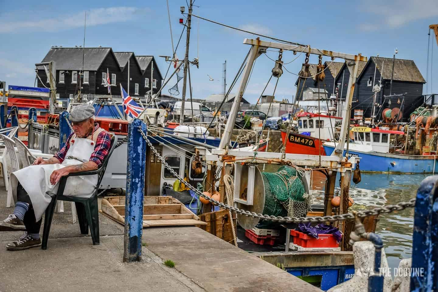 Dogs Day Out With Fetch & Follow On Tour In Dog-Friendly Whitstable 12