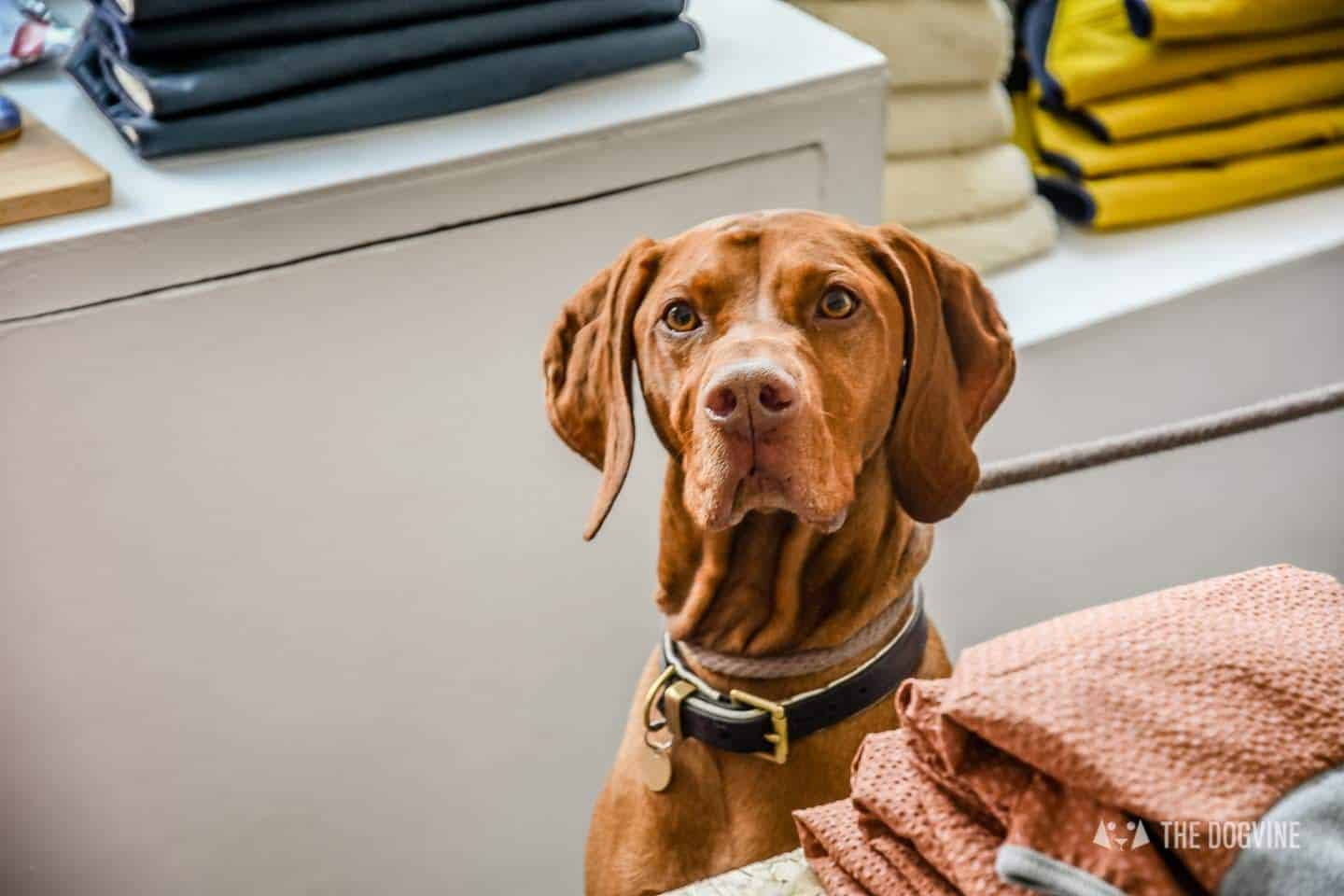 Dogs Day Out With Fetch & Follow On Tour In Dog-Friendly Whitstable 34