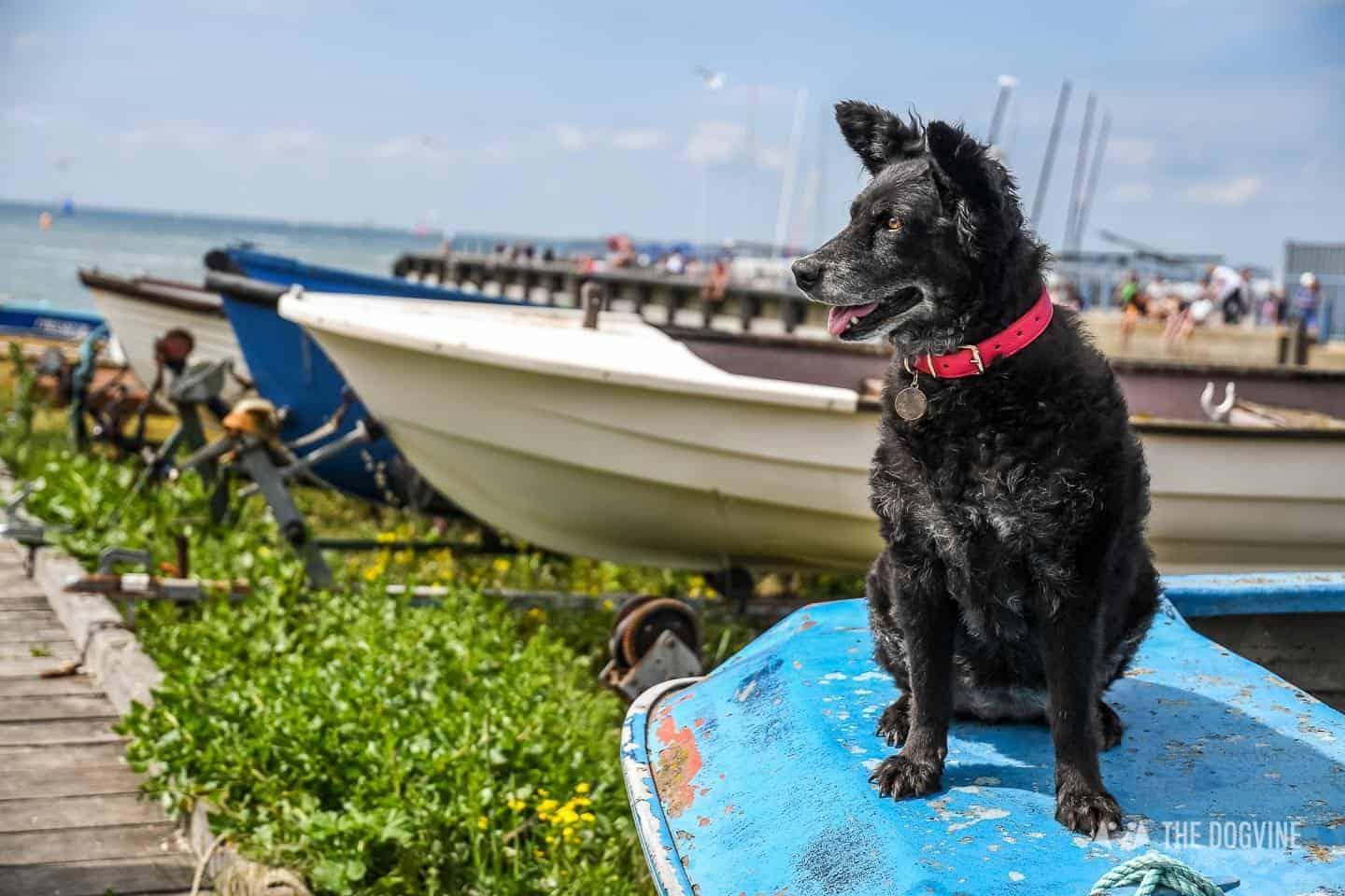 Dogs Day Out With Fetch & Follow On Tour In Dog-Friendly Whitstable 44