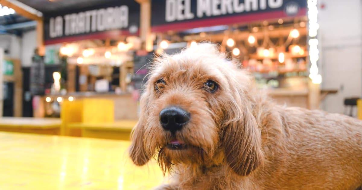 My Dog Friendly London By Amber The Basset Fauve De Bretagne