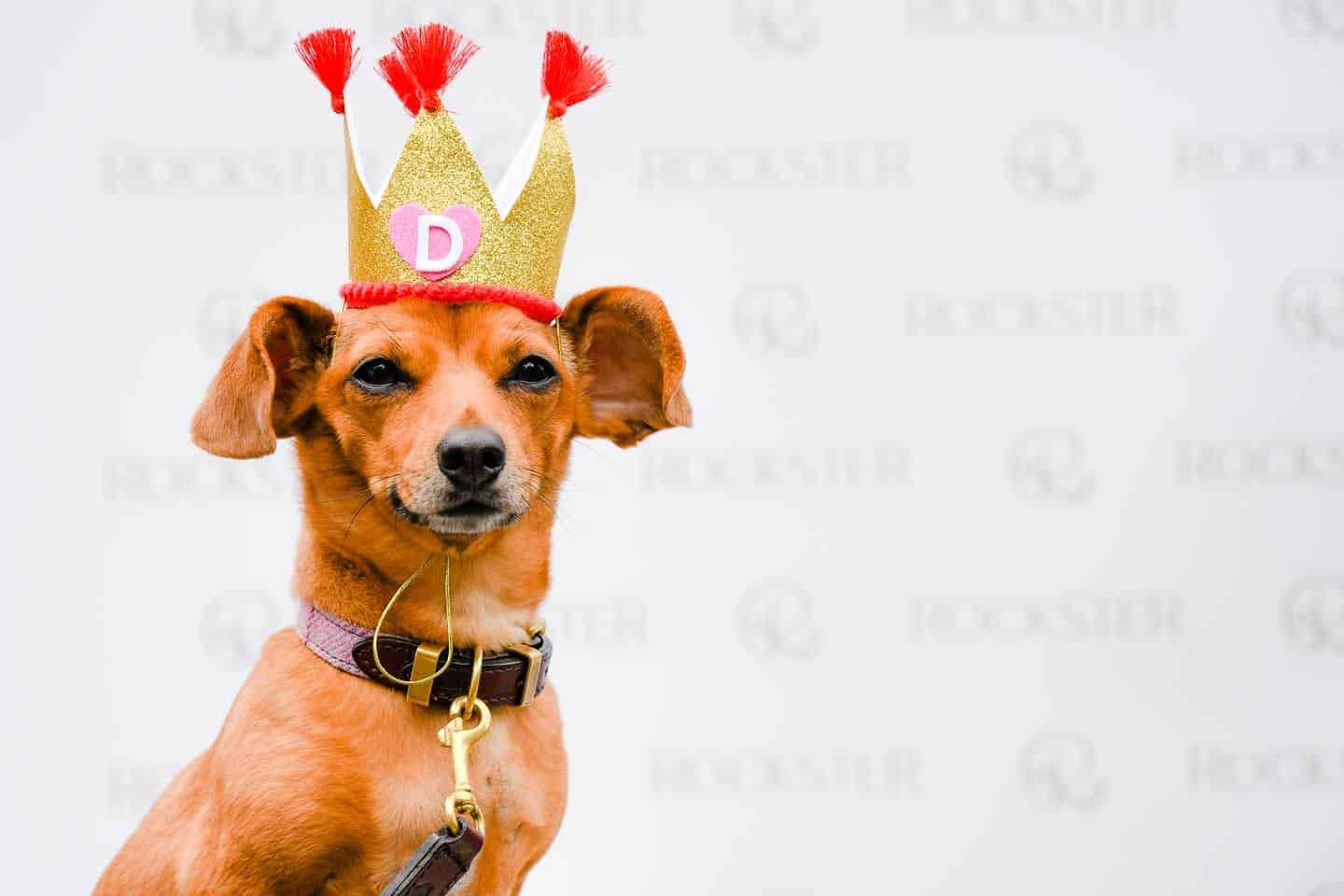 Best Dressed Dachshunds At The Sausage Social London Mad Hatters Tea Party