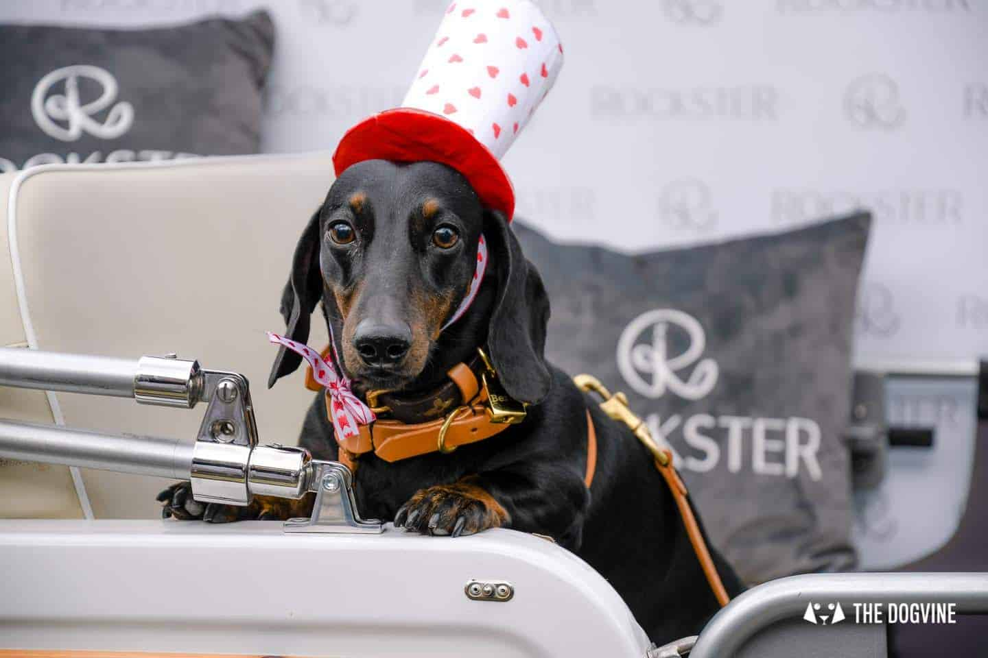 London's Best Dressed Dachshunds At Sausage Social London The Mad Hatters Tea Party 141