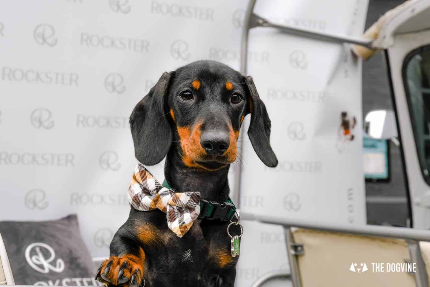 London's Best Dressed Dachshunds At Sausage Social London The Mad Hatters Tea Party 147