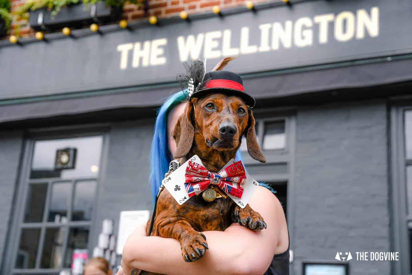 London's Best Dressed Dachshunds At Sausage Social London The Mad Hatters Tea Party 21