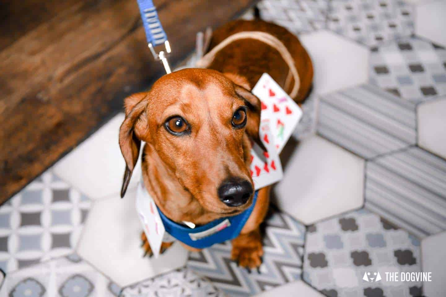 London's Best Dressed Dachshunds At Sausage Social London The Mad Hatters Tea Party 65