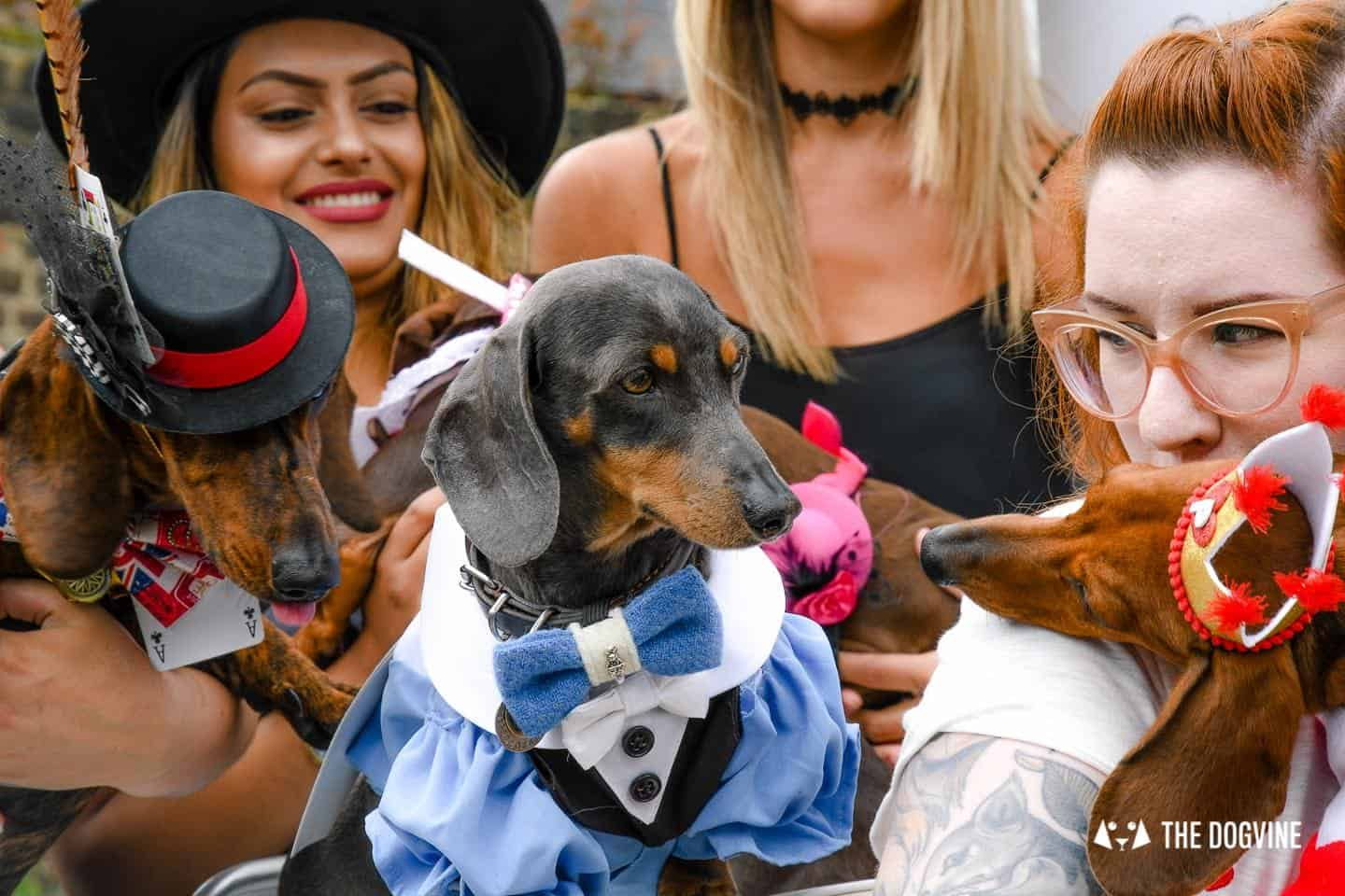 London's Best Dressed Dachshunds At Sausage Social London The Mad Hatters Tea Party 73