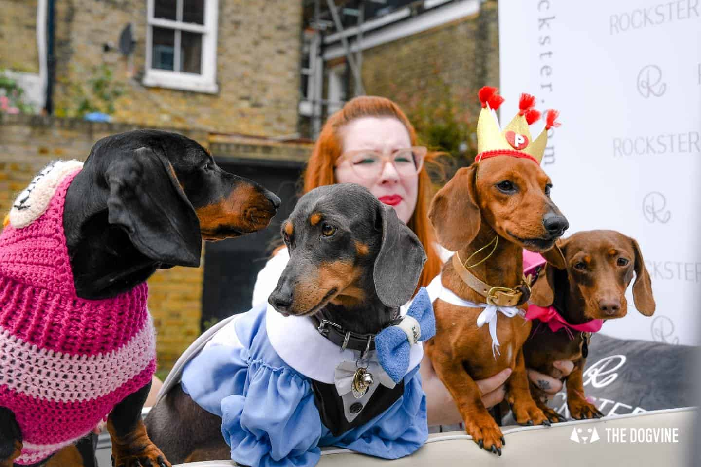 London's Best Dressed Dachshunds At Sausage Social London The Mad Hatters Tea Party 83