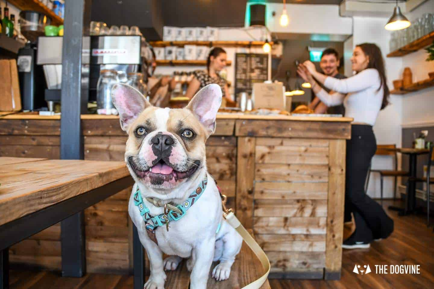 My Dog Friendly London By Herbie and Dave The Frenchies 18