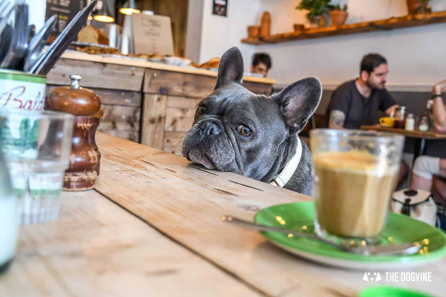 My Dog Friendly London By Herbie and Dave The Frenchies 5