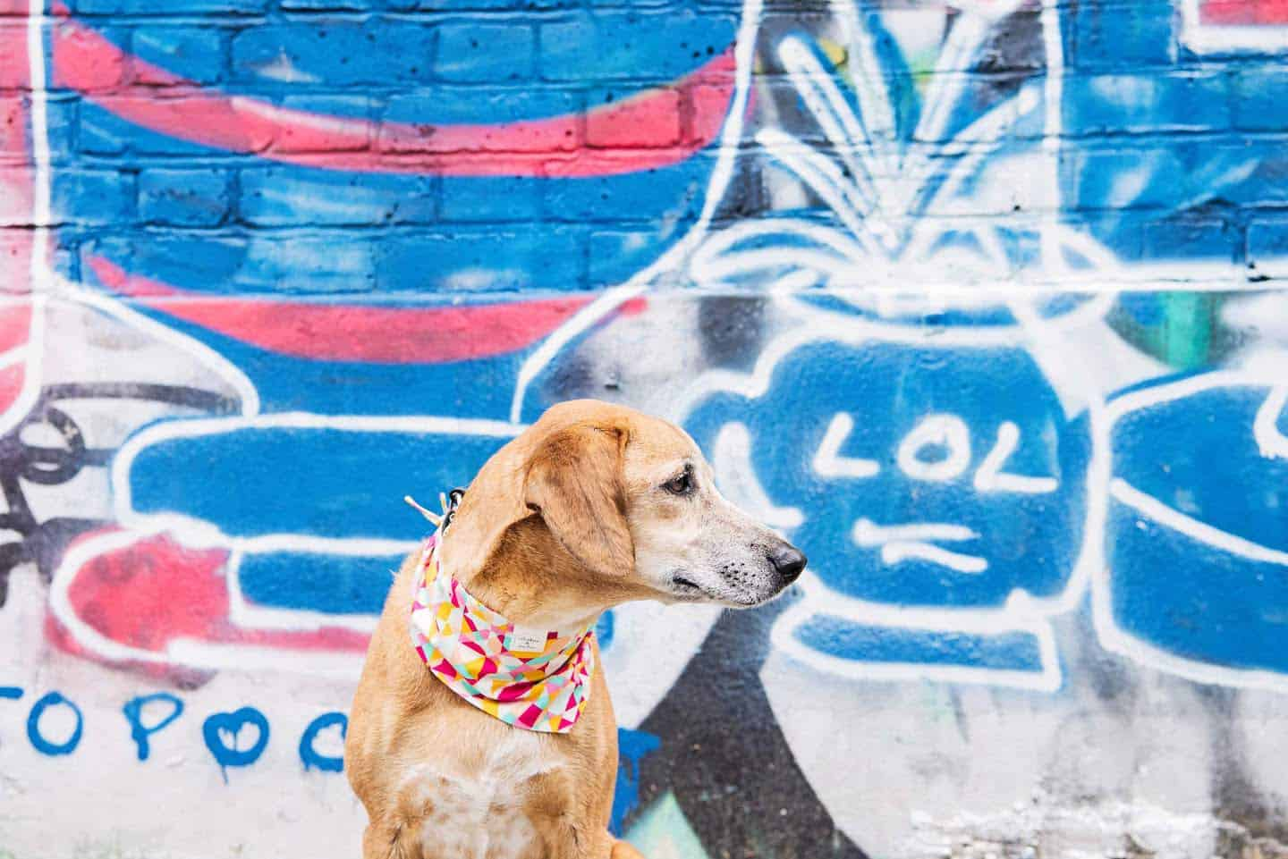 Pawsome London Dog Events For The Weekend 1