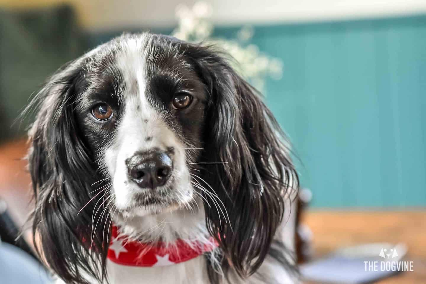 Pawsome London Dog Events For The Weekend 2