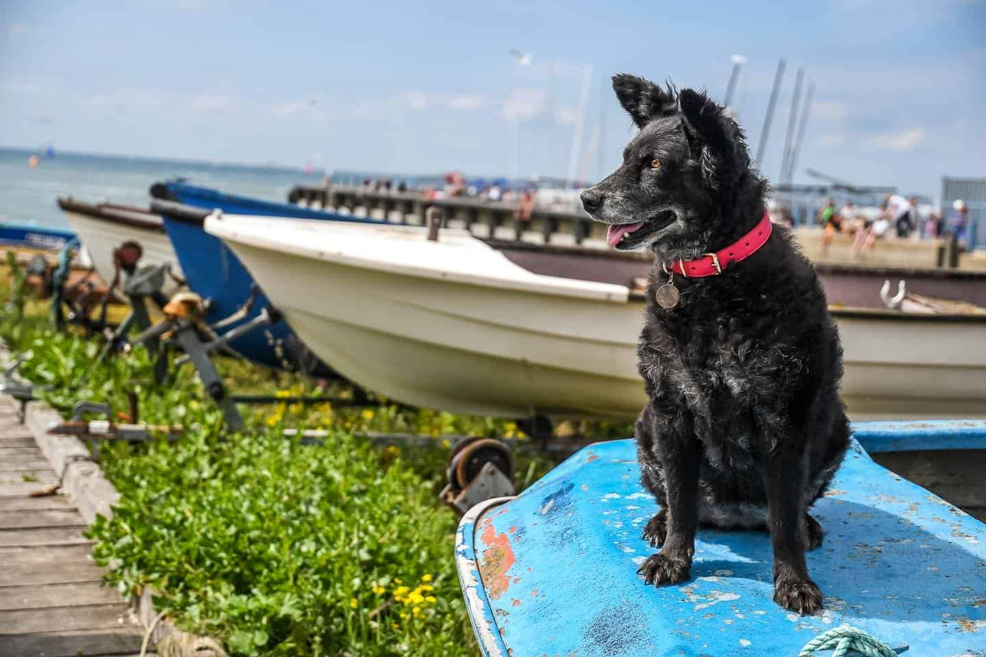 The Dogvine Day Out With Fetch & Follow In Dog-Friendly Whitstable