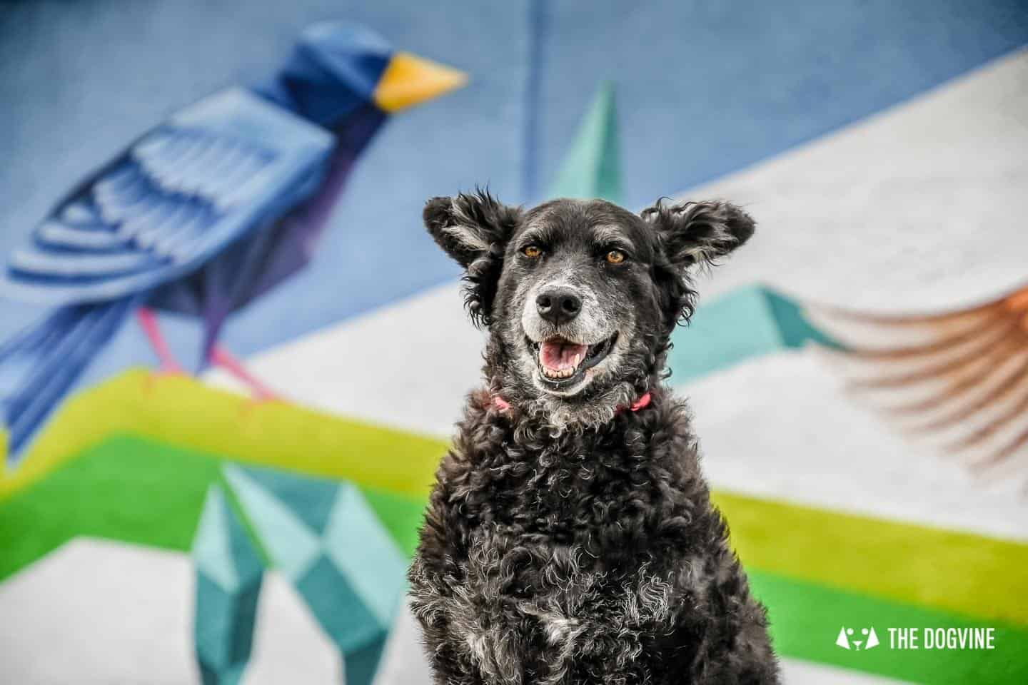 The Dogvine Selected As One Of The Feedspot Top 10 UK Dog Blogs 9