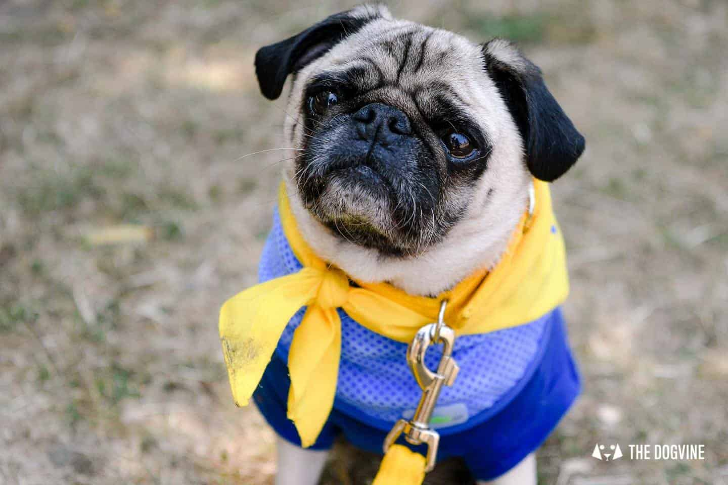 All Things Dog At The Canary Woof Dog Show 2018 9