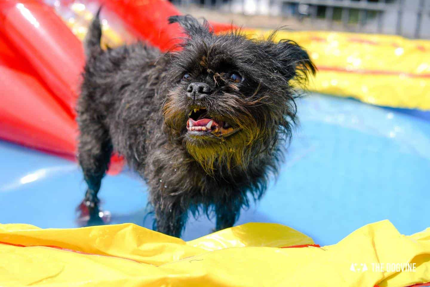 Summer London Dog Events On This Month Frida
