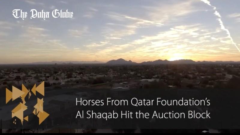 Horses from Qatar Foundation's Al Shaqab hit the auction block