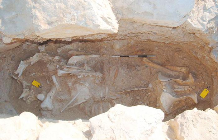 Qatar Museums makes new archaeological discovery in Asaila, located in the west of Qatar