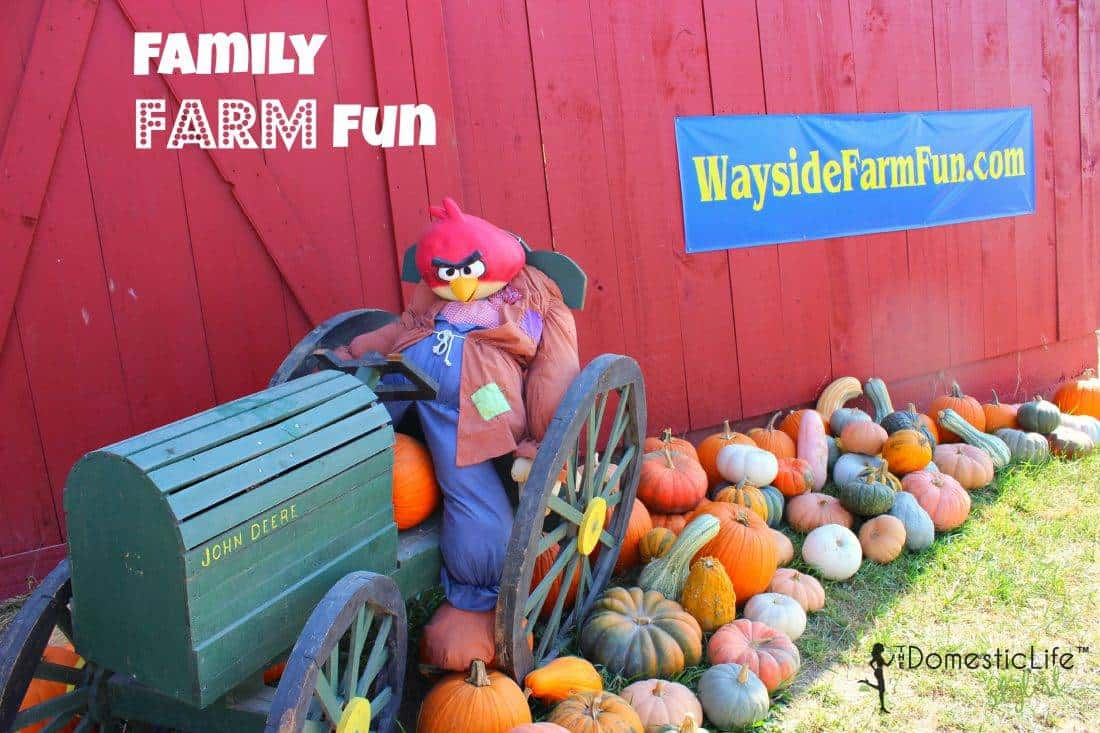 Fall activities at Wayside Farm in Berryville, VA