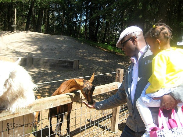 goat feeding, father daughter activities