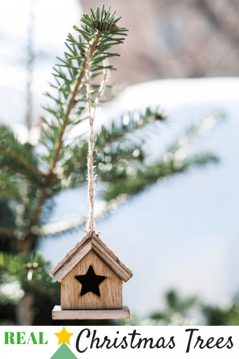 Reason that real Christmas Trees are better and all the reasons to buy one