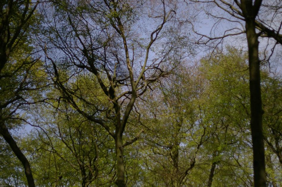 10-trees