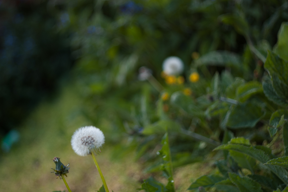 weeds_patch-1