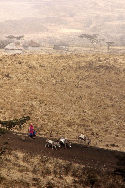Massai mit Eseln im Morgenlicht