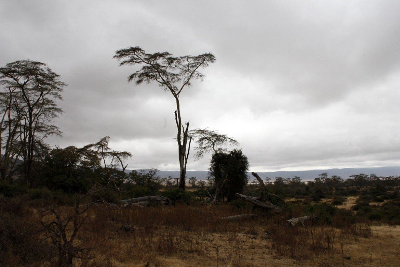 Baumgerippe im Ngorongoro Krater