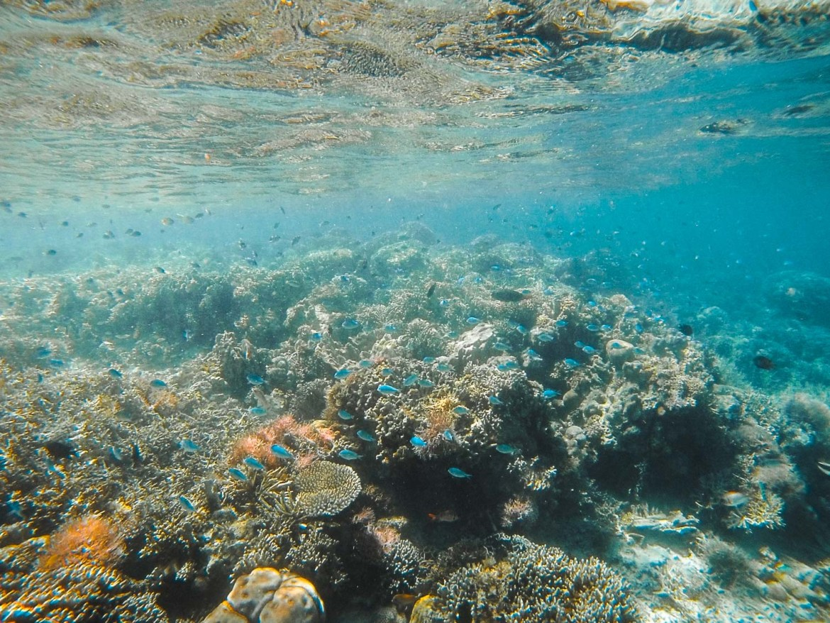 Snorkeling in Flores, indonesia
