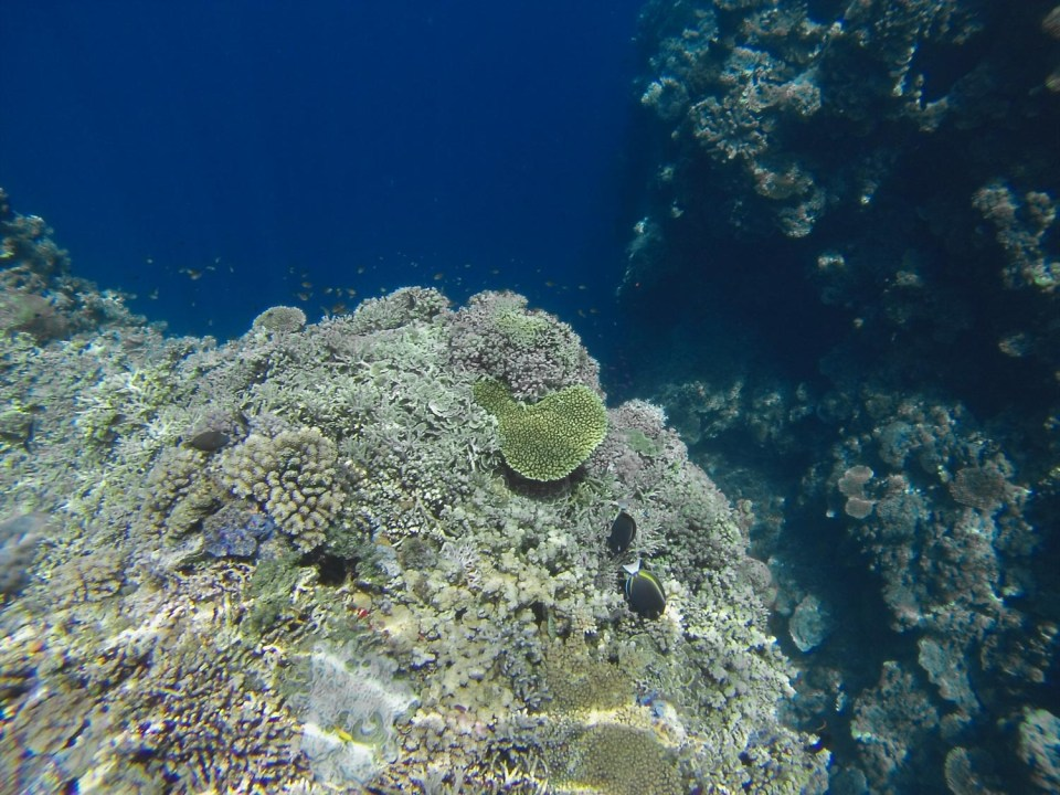 Snorkeling in the Togian Islands