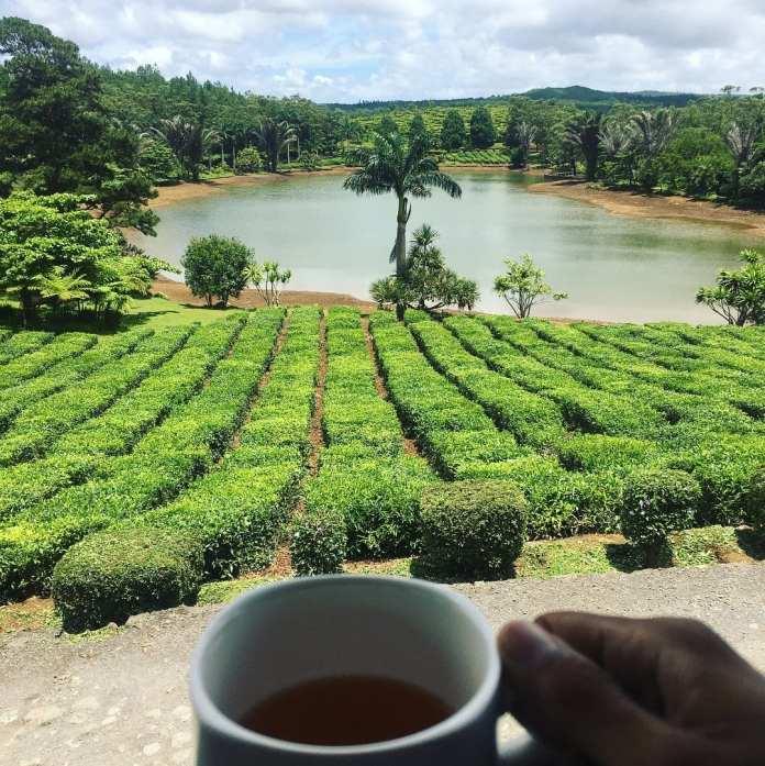 Bois Cheri tea museum