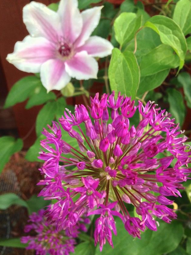 Purple Garden Hues