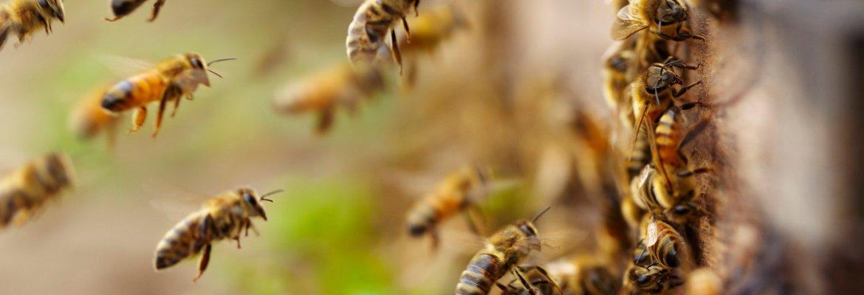 bee drone North Dakota bees Bee Innovative Beedar