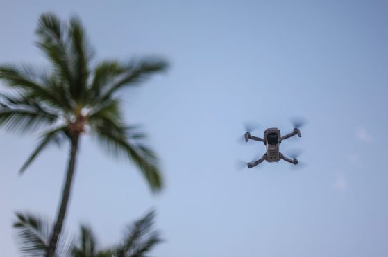 DJI Mavic Mini flying stock hawaii palm tree
