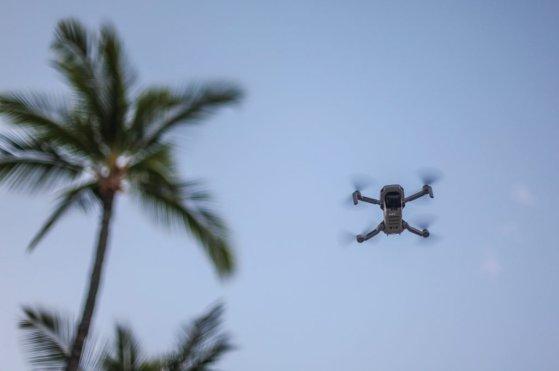DJI Mavic Mini flying stock hawaii palm tree