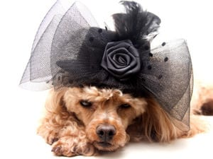NYC's 6 Best High End Pet Boutiques