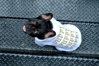 NYC Gets a Streetwear Pop-Up Shop for Dogs