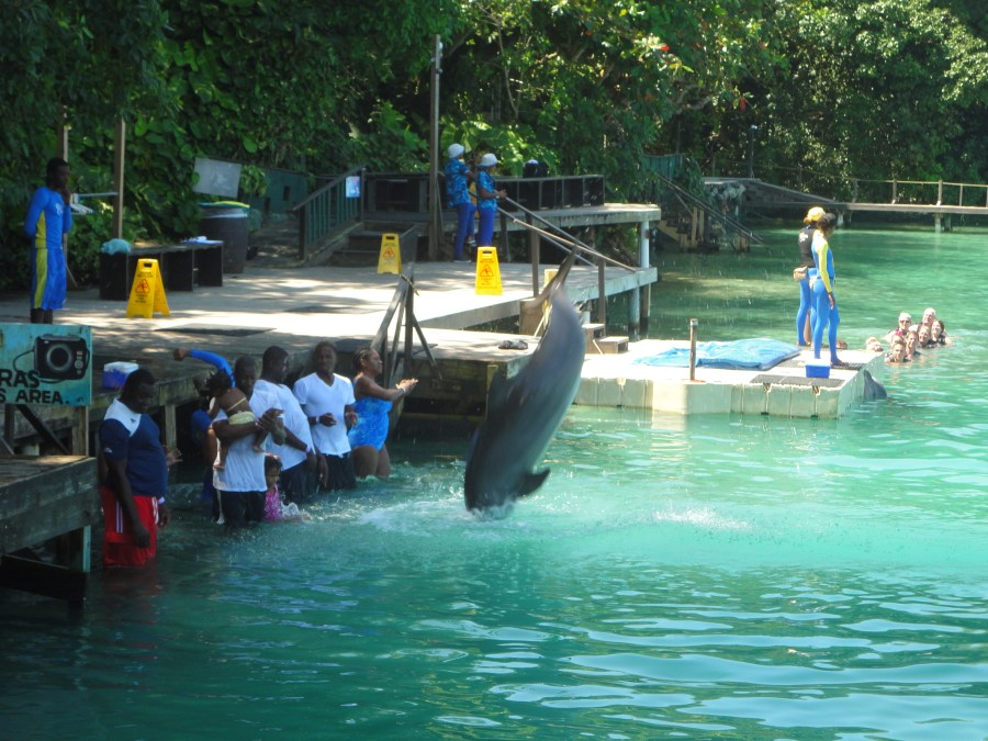 Dolphin Encounter at Dolphin's Cove