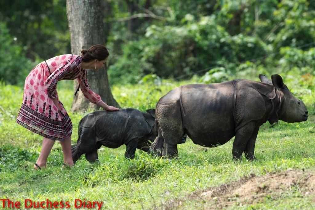 Kate Middleton Feeds Baby Elephants And Rhinos Best Photo