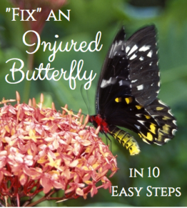 "How to ""Fix"" an Injured Butterfly in 10 Easy Steps"