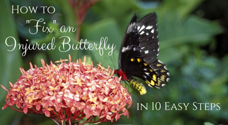 """How to """"Fix"""" an Injured Butterfly in 10 Easy Steps"""