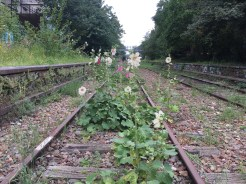Flowers have taken over where the trains once ran.