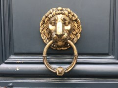 A grand and golden lion
