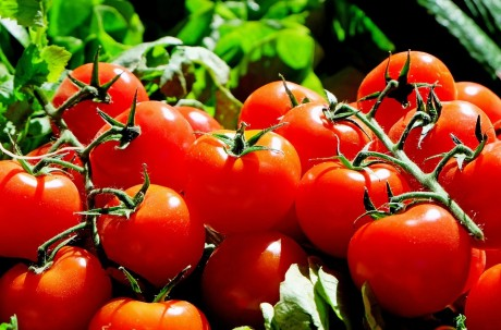 Tomatoes - Public Domain