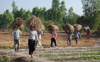 An Eco-Farm in Myanmar (Burma): Saving the World with Organic Agriculture